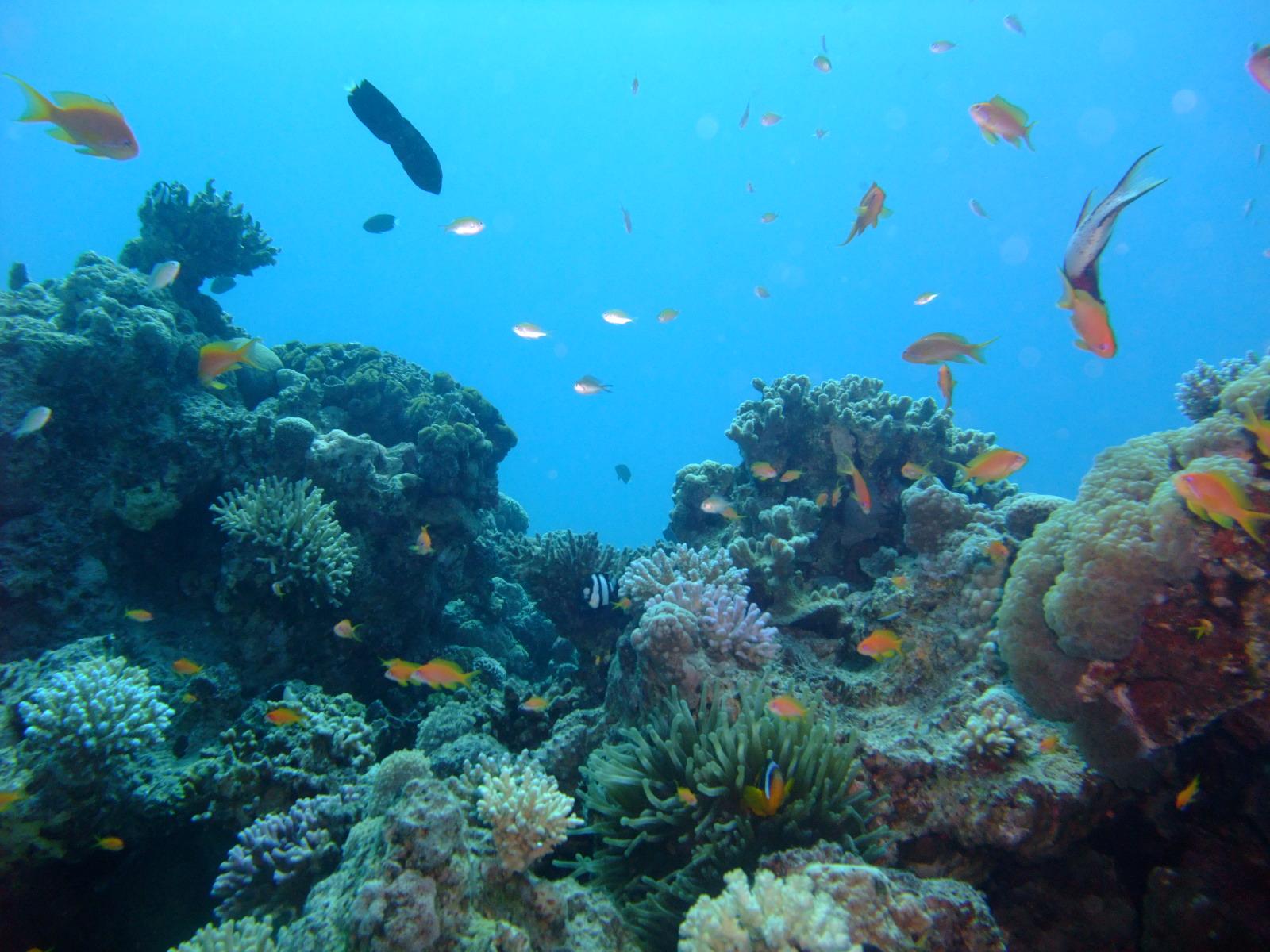 North pay aqaba dive sites dive in aqaba jordan red sea for Aqaba dive