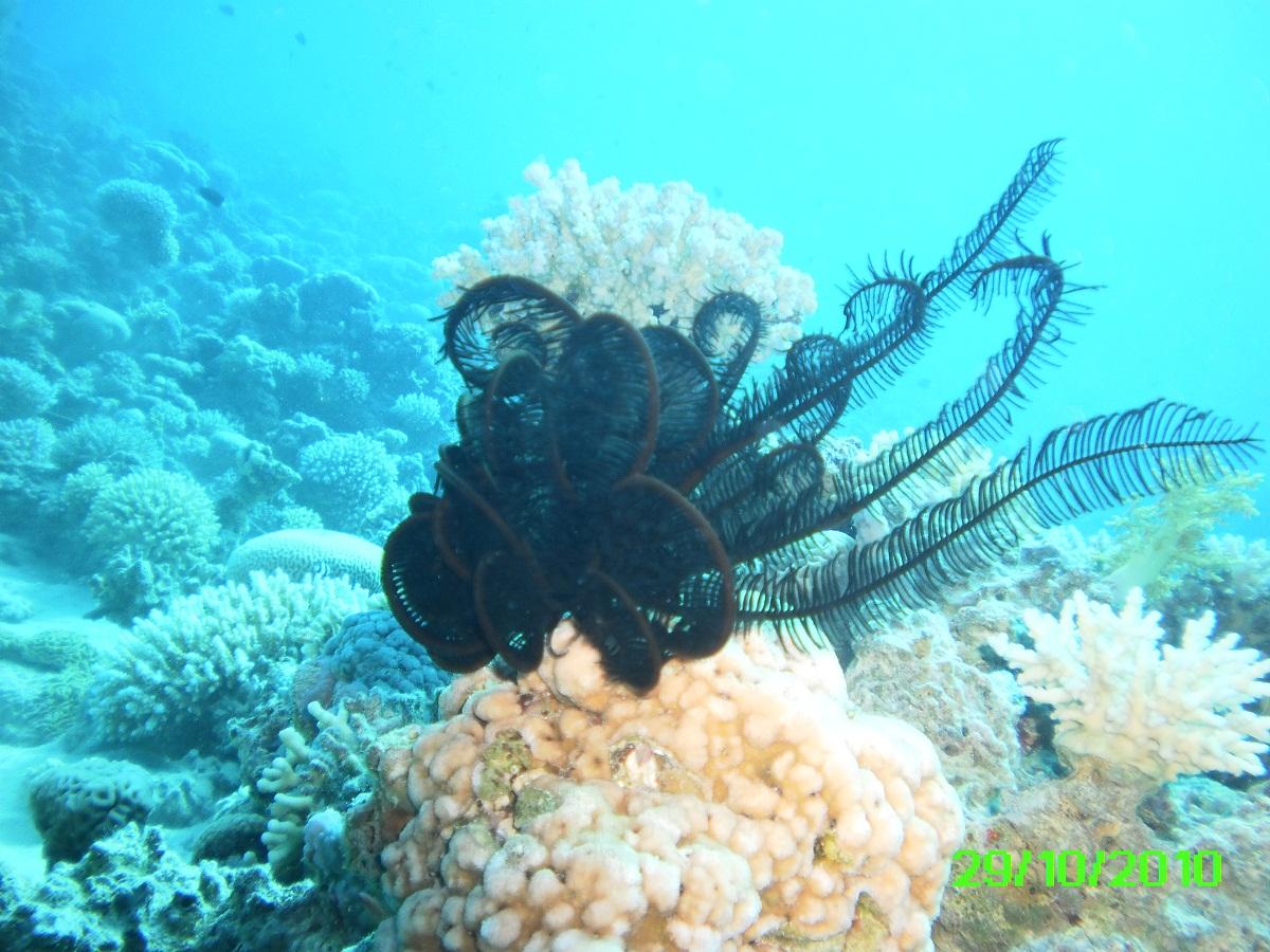 Visitors bay dive in aqaba for Aqaba dive